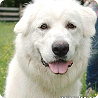 Adopt A Pet :: Zoey in OH - Beacon, NY