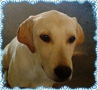 Labrador Retriever Mix Puppy for adoption in Ozark, Alabama - Jeter