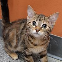 Adopt A Pet :: Pepe Le Pew Pew - Michigan City, IN