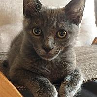 Adopt A Pet :: Ollie - Tampa, FL