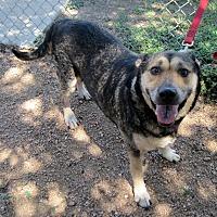 Adopt A Pet :: Cambria - Georgetown, TX