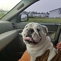 Adopt A Pet :: Titus - Odessa, FL
