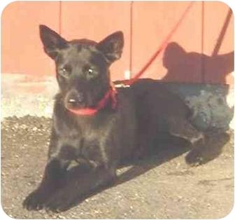 Terrier (Unknown Type, Medium) Mix Dog for adoption in Austin, Minnesota - Penelope