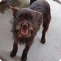 Adopt A Pet :: Raisin - Phoenix, AZ