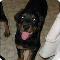 Adopt A Pet :: Kash - Chandler, IN