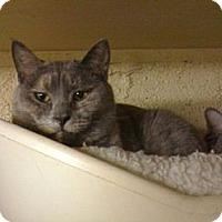 Adopt A Pet :: Sasha - Lombard, IL