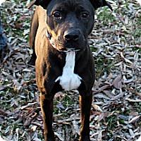 Adopt A Pet :: Minnie - Evansville, IN