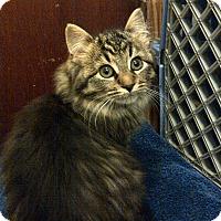 Adopt A Pet :: Miss Daisy - Douglas, ON