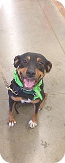Rottweiler Mix Dog for adoption in Red Lion, Pennsylvania - Missy
