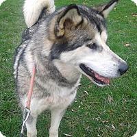 Adopt A Pet :: Frosty - Augusta County, VA