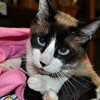 Adopt A Pet :: Zeus - Alhambra, CA