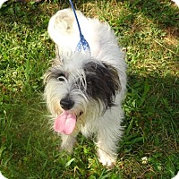 Adopt A Pet :: Raymond - Delaware, OH