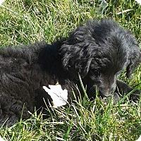 Adopt A Pet :: Louise - Providence, RI