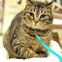 Adopt A Pet :: Simon - Ortonville, MI