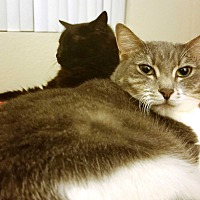Adopt A Pet :: Dexter & Hannah - Orange, CA