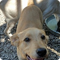 Adopt A Pet :: Margie - ST LOUIS, MO