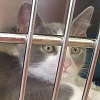 Adopt A Pet :: Nena 1594 - Alva, OK
