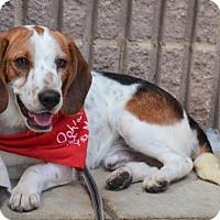 Adopt A Pet :: Carlton - Rockville, MD