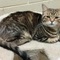 Adopt A Pet :: Merlin - Erie, PA
