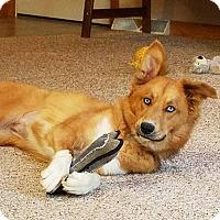 Adopt A Pet :: Jojo ~ Adoption Pending - Youngstown, OH