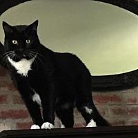 Adopt A Pet :: Scrappy - Marlborough, MA