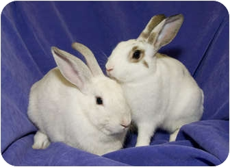 Other/Unknown Mix for adoption in Los Angeles, California - Granite & Sandy