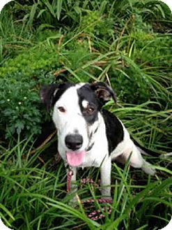 Labrador Retriever Mix Dog for adoption in Lufkin, Texas - Scout