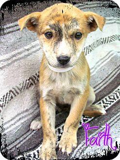 Labrador Retriever Mix Puppy for adoption in Estancia, New Mexico - Faith