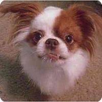 Adopt A Pet :: Bentley,-NJ - Mays Landing, NJ