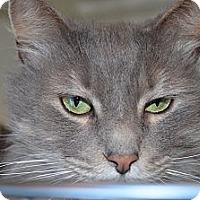 Adopt A Pet :: Cutie - Sanford, ME