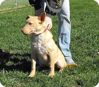 Australian Shepherd/Shepherd (Unknown Type) Mix Dog for adoption in Napoleon, Ohio - Meg