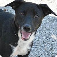 Adopt A Pet :: Bobby - Athens, GA