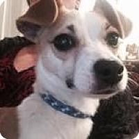 Adopt A Pet :: Zoey - Shawnee Mission, KS