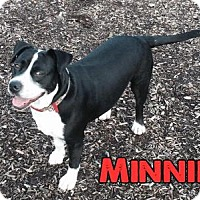 Adopt A Pet :: Minnie - Cary, IL