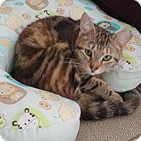 Adopt A Pet :: Jasmine - Port Republic, MD
