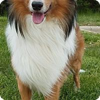 Adopt A Pet :: Brady-Adopted! - Detroit, MI