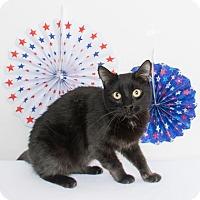 Adopt A Pet :: Lucy Lou - Chico, CA