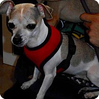 Adopt A Pet :: Patches - Freeport, NY