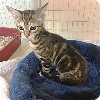 Adopt A Pet :: Della - Santa Rosa, CA