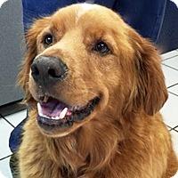 Adopt A Pet :: Carmel - BIRMINGHAM, AL