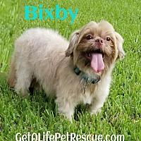 Adopt A Pet :: Bixby - Wellington, FL