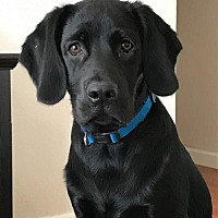 Adopt A Pet :: ROCKY BALBOA - Washington, DC