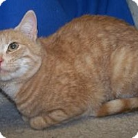 Adopt A Pet :: Mamamia - Colorado Springs, CO