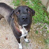 Labrador Retriever Mix Dog for adoption in Somerset, Kentucky - Leeloo