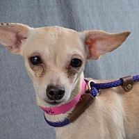 Adopt A Pet :: Portia - Colorado Springs, CO