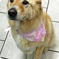 Adopt A Pet :: Bella VI - BIRMINGHAM, AL