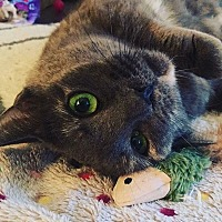 Adopt A Pet :: Tilly - Vineland, NJ