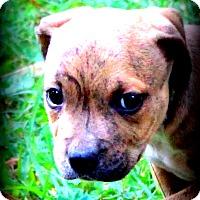Adopt A Pet :: Martha - Glastonbury, CT