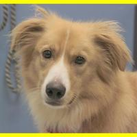 Adopt A Pet :: Elon - Dodgeville, WI