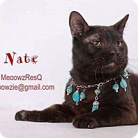 Adopt A Pet :: Nate - Orange, CA